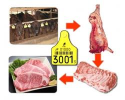 牛肉のトレーサビリティ