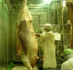 牛肉の食肉衛生検査